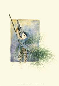 Nuthatch and Pine by Janet Mandel
