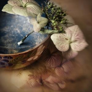 The Hydrangea by Janet Matthews