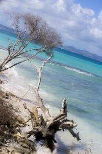Buck Island, Saint Croix, Us Virgin Islands. Beach with Christiansted by Janet Muir