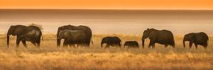 Etosha NP, Namibia, Africa. Elephants Walk in a Line at Sunset by Janet Muir