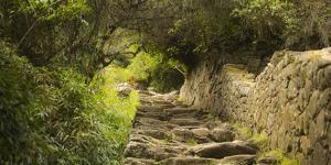 Machu Pichu, Peru. Path to the Sun Gate. by Janet Muir