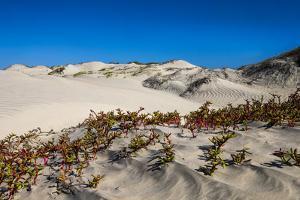 Mexico. Baja, Gulf of California, Magdalena Beach. Sand dunes. by Janet Muir