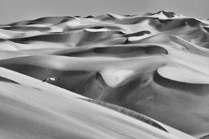 Sandwich Harbor, Namibia. Gull flies over immense sand dunes. by Janet Muir