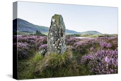 Standing Stone and Heather, Creggenan Lake, North Wales, Wales, United Kingdom, Europe