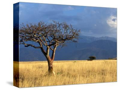A Lone Tree in the Grasslands of Nechisar National Park, Ethiopia