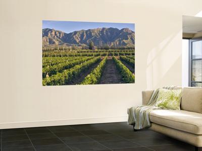 Cabernet Sauvignon Vines in Huailai Rongchen Vineyard, Hebei Province, China