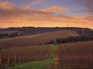 Early Spring over Knutsen Vineyards in Red Hills above Dundee, Oregon, USA by Janis Miglavs