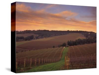 Early Spring over Knutsen Vineyards in Red Hills above Dundee, Oregon, USA
