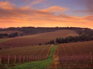 Early Spring over Knutsen Vineyards in Red Hills, Oregon, USA by Janis Miglavs