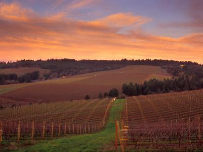 Early Spring over Knutsen Vineyards in Red Hills, Oregon, USA
