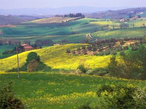 Green Rolling Hills and Spotted Yellow Mustard Flowers, Tuscany, Italy by Janis Miglavs