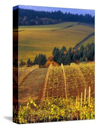 Knutsen Vineyard in the Red Hills of the Willamette Valley, Oregon, USA