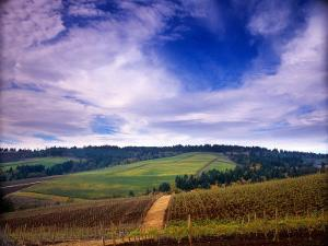 Knutsen Vineyard in the Red Hills of the Willamette Valley, Oregon, USA by Janis Miglavs