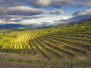 Newton Vineyard, Napa Valley, California, Usa by Janis Miglavs