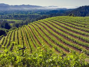 Newton Vineyard, Napa Valley, California, Usa by Janis Miglavs