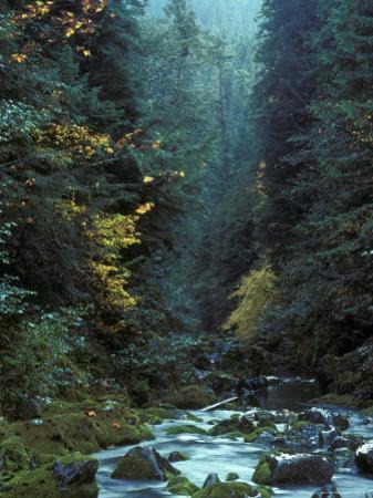 North Fork Santiam River near Opal Creek, Oregon Cascades, USA