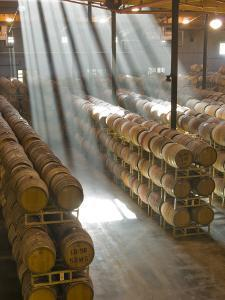 Shafts of Light in Barrel Room of Montevina Winery, Shenandoah Valley, California, USA by Janis Miglavs