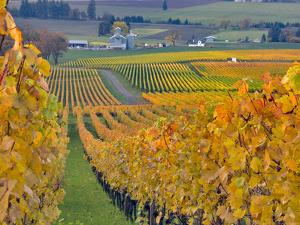 Stoller Vineyard, Dundee, Yamhill County, Willamette Valley, Oregon, Usa by Janis Miglavs