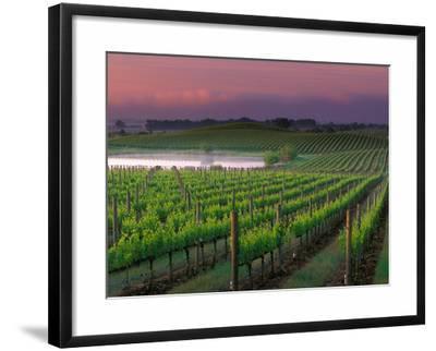Sunrise in Distant Fog, Carnaros, Napa Valley, California, USA