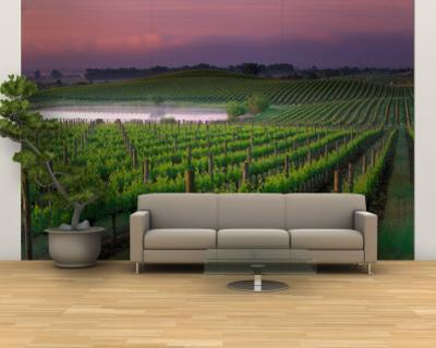 Beautiful Wine wall murals artwork for sale Posters and Prints