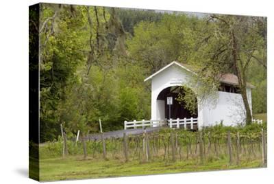 USA, Oregon, Philomath. Harris Bridge Vineyard by the Covered Bridge