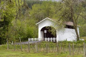 USA, Oregon, Philomath. Harris Bridge Vineyard by the Covered Bridge by Janis Miglavs