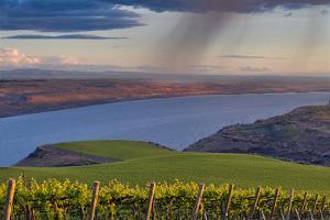 USA, Washington, Columbia Valley. Rain Falls on the Benches Vineyard by Janis Miglavs