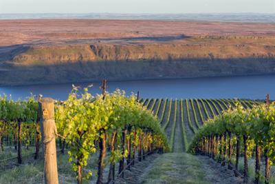 USA, Washington. the Benches Vineyard in the Horse Heaven Hills Ava