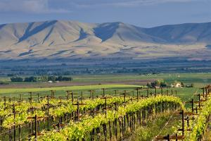 USA, Washington, Yakima. View from One of the Red Willow Vineyards by Janis Miglavs