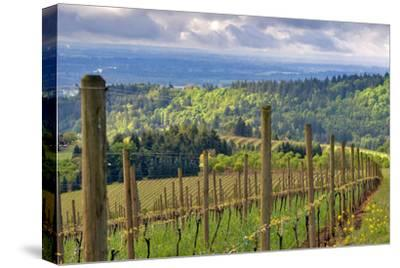 View from Knights Gambit Vineyard, Dundee, Yamhill County, Oregon, USA
