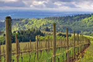 View from Knights Gambit Vineyard, Dundee, Yamhill County, Oregon, USA by Janis Miglavs