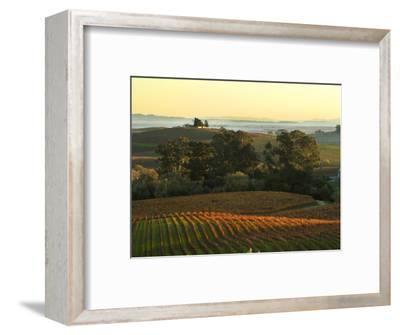 Vineyard from Artesa Winery, Los Carneros, Napa Valley, California