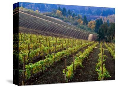 Vineyard in the Willamette Valley, Oregon, USA