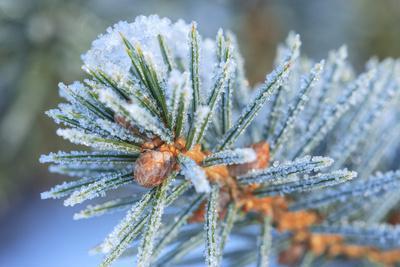https://imgc.artprintimages.com/img/print/january-snow-in-mill-creek-washington-state-neighborhood_u-l-q1d2n470.jpg?p=0
