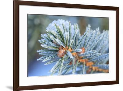 January Snow in Mill Creek, Washington State neighborhood-Stuart Westmorland-Framed Premium Photographic Print