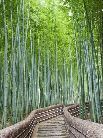 https://imgc.artprintimages.com/img/print/japan-kyoto-arashiyama-adashino-nembutsu-ji-temple-bamboo-forest_u-l-pjbxi70.jpg?p=0