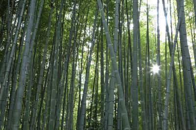 Japan, Kyoto. Sunburst Inside the Arashiyama Bamboo Grove-Jaynes Gallery-Photographic Print