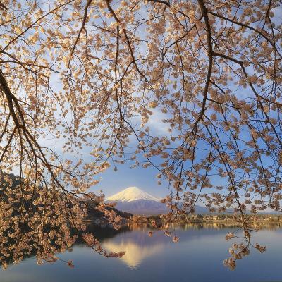 Japan, Yamanashi Prefecture, Kawaguchi-Ko Lake, Mt Fuji and Cherry Blossoms-Michele Falzone-Photographic Print