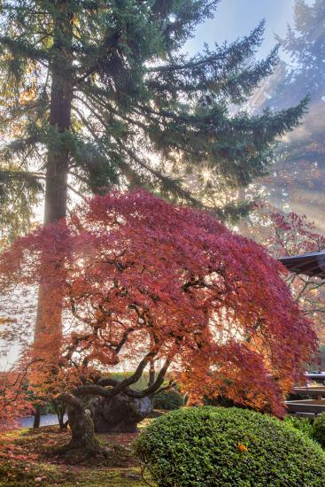 Japanese Gardens in autumn in Portland, Oregon, USA-Chuck Haney-Photographic Print