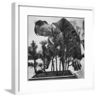 Japanese Horticulturist Kan Yashiroda Tending to a Bonsai Tree-Gordon Parks-Framed Premium Photographic Print