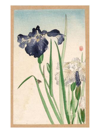https://imgc.artprintimages.com/img/print/japanese-irises_u-l-pfeukm0.jpg?p=0