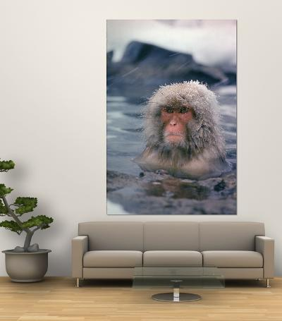 Japanese Macaque, Snow Monkey Sitting in Waters of Hot Spring in Shiga Mountains During a Snowfall-Co Rentmeester-Giant Art Print