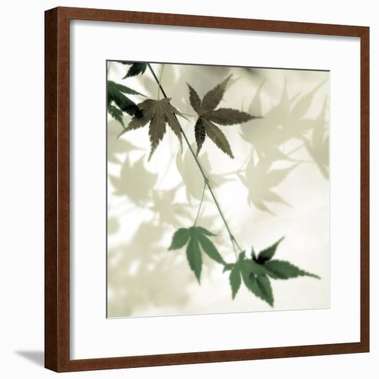 Japanese Maple #2-Alan Blaustein-Framed Photographic Print