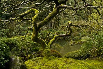 Japanese Maple, Portland Japanese Garden, Portland, Oregon (PR)-Michel Hersen-Photographic Print