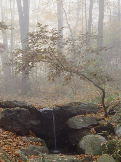 Japanese Maple Trees in the Fog in a Japanese Garden-Darlyne A^ Murawski-Photographic Print