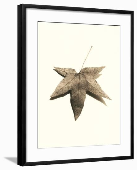 Japanese Maple-Alan Blaustein-Framed Photographic Print