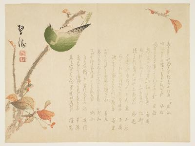 Japanese Nightingale Perched on a Branch- Suit?-Giclee Print