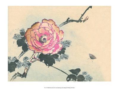 Japanese Peony Flower-Haruna Kinzan-Art Print