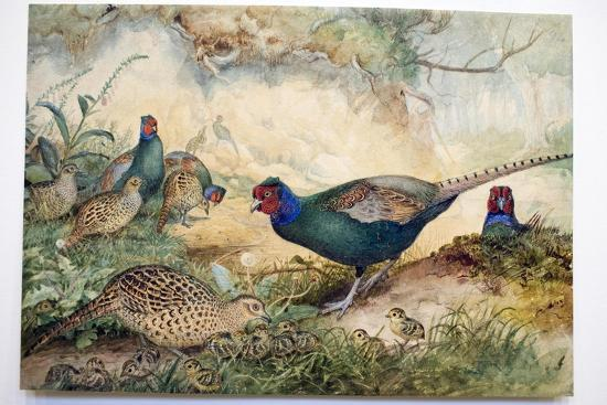 Japanese Pheasants, 1865-Joseph Wolf-Giclee Print