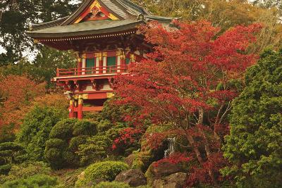 Japanese Tea Garden in Golden Gate Park; San Francisco California United States of America-Design Pics Inc-Photographic Print